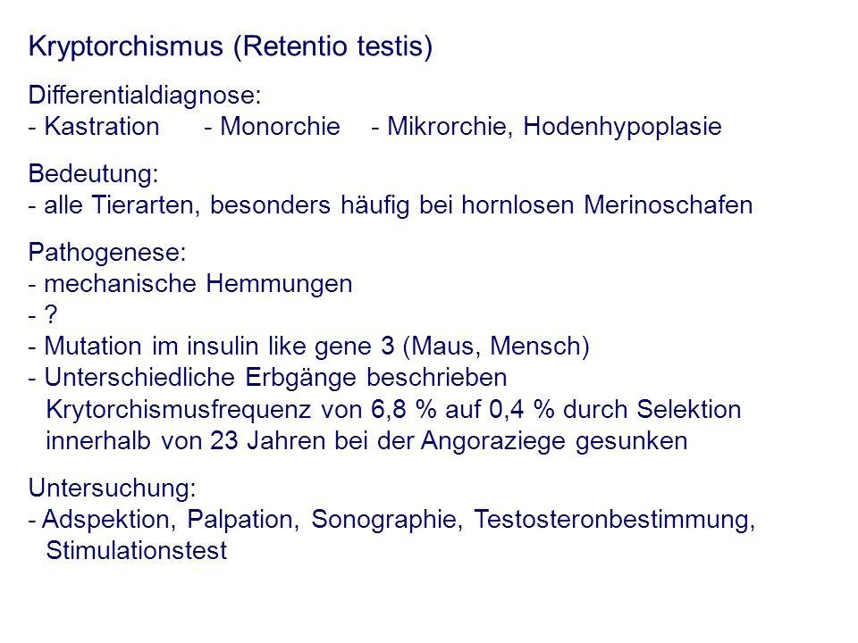 Kryptorchismus (Retentio testis) Differentialdiagnose: - Kastration- Monorchie- Mikrorchie, Hodenhypoplasie Bedeutung: - alle Tierarten, besonders häu