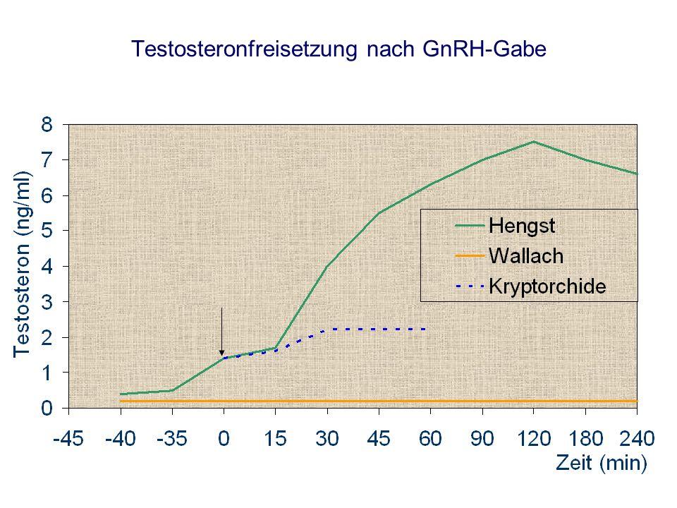 Testosteronfreisetzung nach GnRH-Gabe