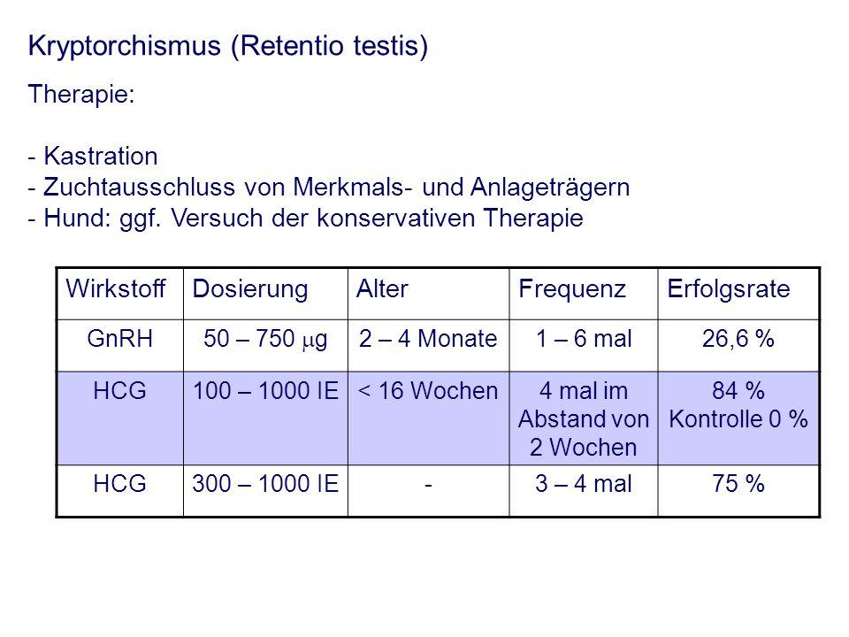 Kryptorchismus (Retentio testis) Therapie: - Kastration - Zuchtausschluss von Merkmals- und Anlageträgern - Hund: ggf. Versuch der konservativen Thera
