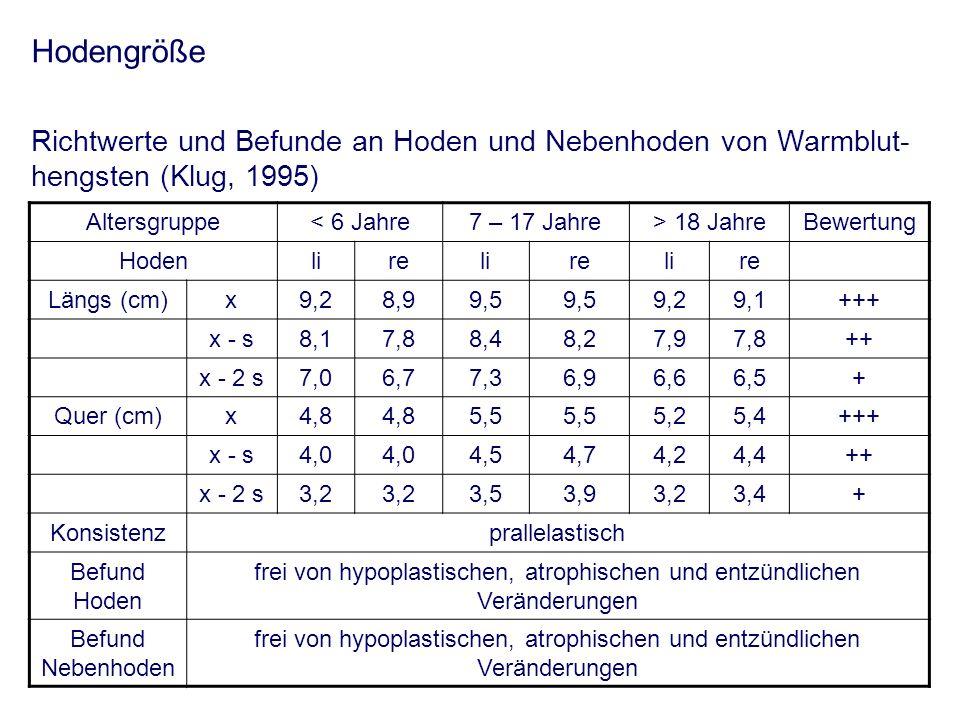 Hodengröße Richtwerte und Befunde an Hoden und Nebenhoden von Warmblut- hengsten (Klug, 1995) Altersgruppe< 6 Jahre7 – 17 Jahre> 18 JahreBewertung Hod