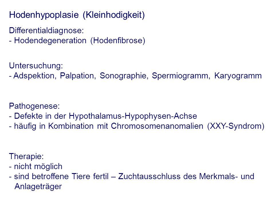 Differentialdiagnose: - Hodendegeneration (Hodenfibrose) Untersuchung: - Adspektion, Palpation, Sonographie, Spermiogramm, Karyogramm Pathogenese: - D