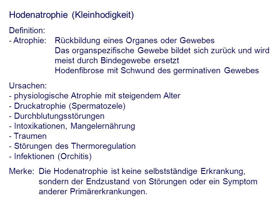 Hodenatrophie (Kleinhodigkeit) Definition: - Atrophie: Rückbildung eines Organes oder Gewebes Das organspezifische Gewebe bildet sich zurück und wird