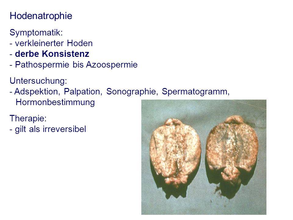 Hodenatrophie Symptomatik: - verkleinerter Hoden - derbe Konsistenz - Pathospermie bis Azoospermie Untersuchung: - Adspektion, Palpation, Sonographie,