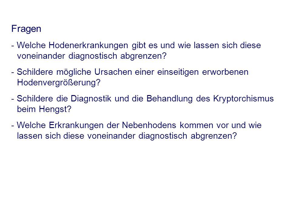 Fragen - Welche Hodenerkrankungen gibt es und wie lassen sich diese voneinander diagnostisch abgrenzen? - Schildere mögliche Ursachen einer einseitige