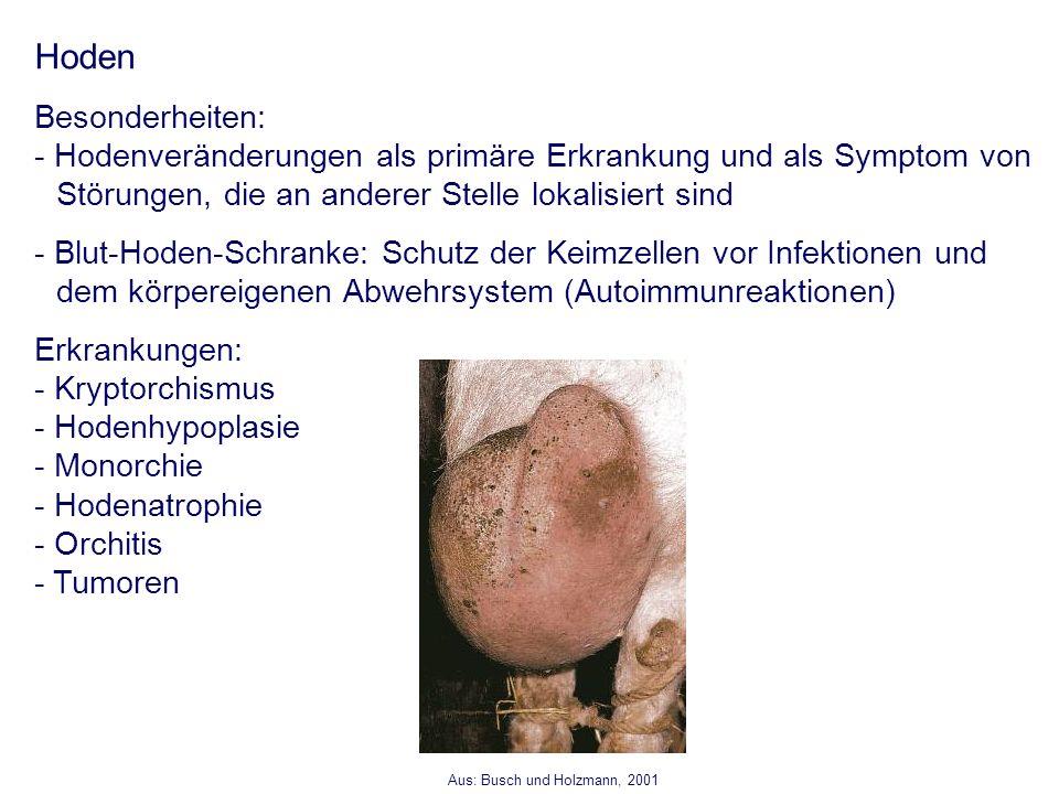 Fein Bild Von Hoden Ideen - Menschliche Anatomie Bilder ...
