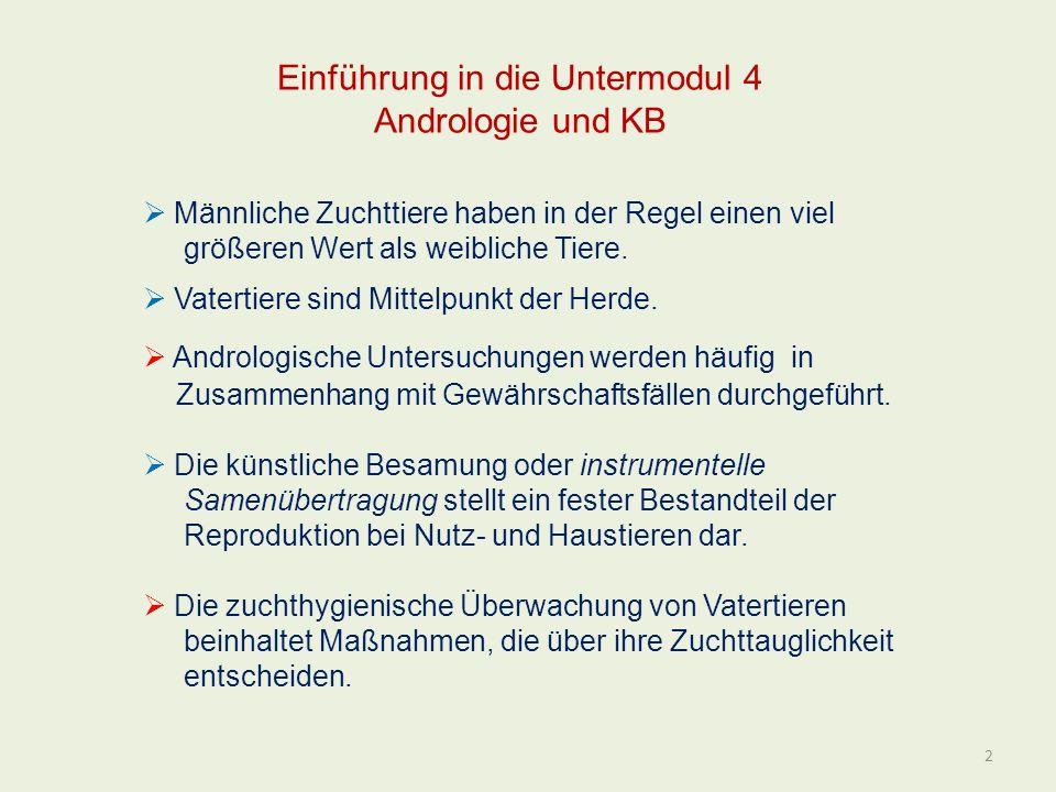 Einführung in die Untermodul 4 Andrologie und KB Männliche Zuchttiere haben in der Regel einen viel größeren Wert als weibliche Tiere. Vatertiere sind