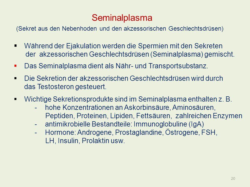 Seminalplasma (Sekret aus den Nebenhoden und den akzessorischen Geschlechtsdrüsen) Während der Ejakulation werden die Spermien mit den Sekreten der ak