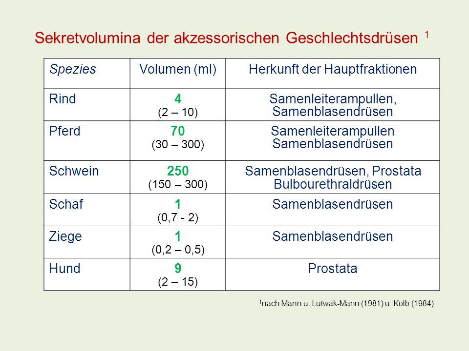 Sekretvolumina der akzessorischen Geschlechtsdrüsen 1 SpeziesVolumen (ml)Herkunft der Hauptfraktionen Rind4 (2 – 10) Samenleiterampullen, Samenblasend