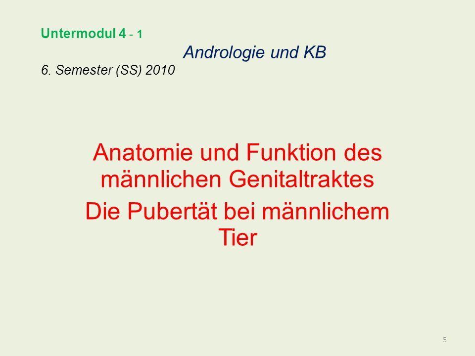 Untermodul 4 - 1 Andrologie und KB 6. Semester (SS) 2010 Anatomie und Funktion des männlichen Genitaltraktes Die Pubertät bei männlichem Tier 5