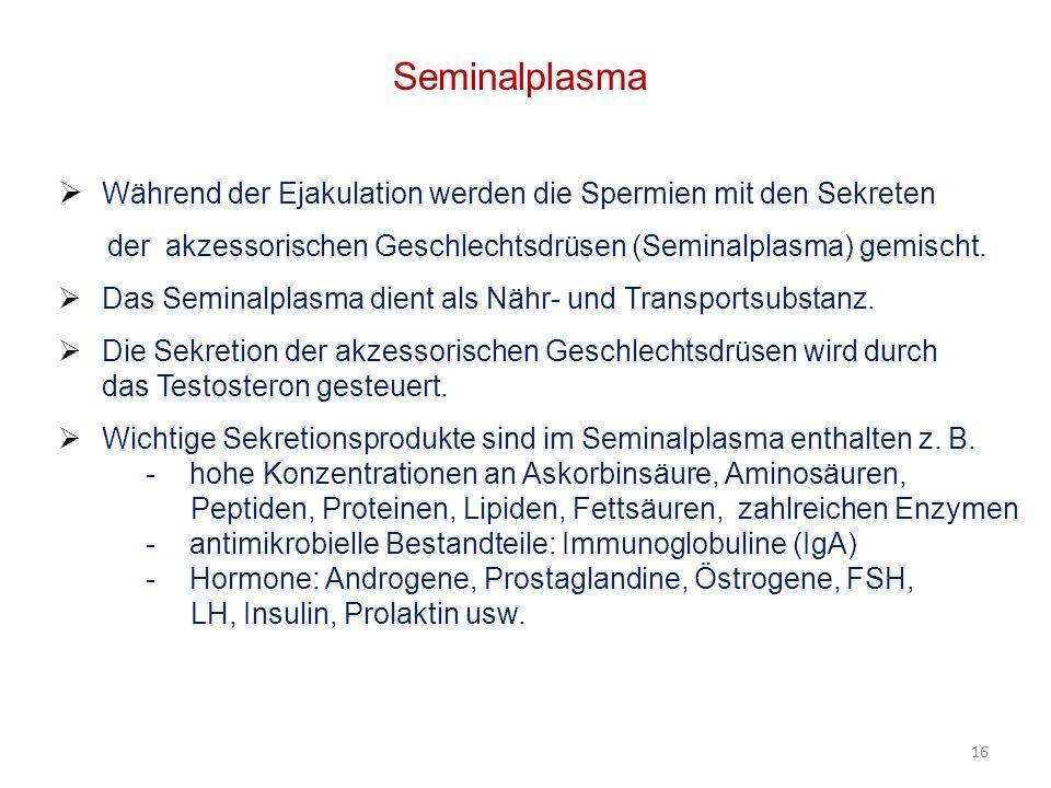 Seminalplasma Während der Ejakulation werden die Spermien mit den Sekreten der akzessorischen Geschlechtsdrüsen (Seminalplasma) gemischt. Das Seminalp