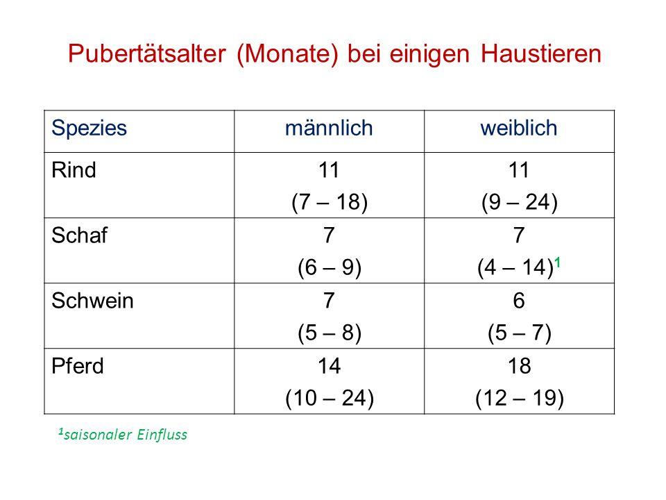 Pubertätsalter (Monate) bei einigen Haustieren Speziesmännlichweiblich Rind11 (7 – 18) 11 (9 – 24) Schaf7 (6 – 9) 7 (4 – 14) 1 Schwein7 (5 – 8) 6 (5 –