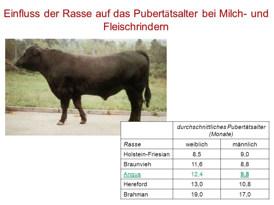 Einfluss der Rasse auf das Pubert ä tsalter bei Milch- und Fleischrindern durchschnittliches Pubertätsalter (Monate) Rasseweiblichmännlich Holstein-Fr