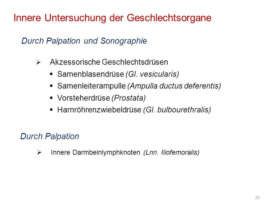 29 Innere Untersuchung der Geschlechtsorgane Durch Palpation und Sonographie Akzessorische Geschlechtsdrüsen Samenblasendrüse (Gl. vesicularis) Samenl