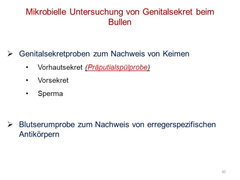 40 Mikrobielle Untersuchung von Genitalsekret beim Bullen Genitalsekretproben zum Nachweis von Keimen Vorhautsekret (Präputialspülprobe) Vorsekret Spe