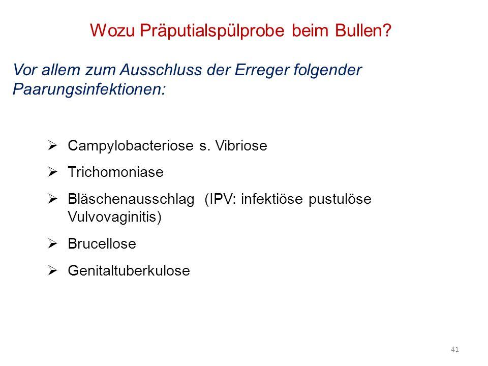 41 Wozu Präputialspülprobe beim Bullen? Campylobacteriose s. Vibriose Trichomoniase Bläschenausschlag (IPV: infektiöse pustulöse Vulvovaginitis) Bruce