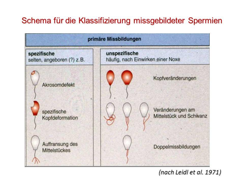 Schema für die Klassifizierung missgebildeter Spermien (nach Leidl et al. 1971)