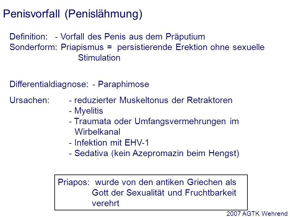 Penisvorfall (Penislähmung) Definition: - Vorfall des Penis aus dem Präputium Sonderform: Priapismus = persistierende Erektion ohne sexuelle Stimulation Differentialdiagnose: - Paraphimose Ursachen:- reduzierter Muskeltonus der Retraktoren - Myelitis - Traumata oder Umfangsvermehrungen im Wirbelkanal - Infektion mit EHV-1 - Sedativa (kein Azepromazin beim Hengst) Priapos: wurde von den antiken Griechen als Gott der Sexualität und Fruchtbarkeit verehrt 2007 AGTK Wehrend