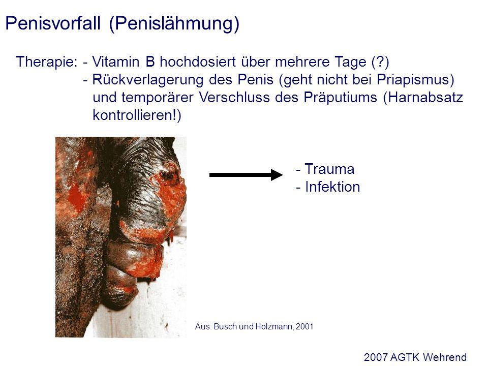 Penisvorfall (Penislähmung) Therapie:- Vitamin B hochdosiert über mehrere Tage (?) - Rückverlagerung des Penis (geht nicht bei Priapismus) und temporärer Verschluss des Präputiums (Harnabsatz kontrollieren!) - Trauma - Infektion Aus: Busch und Holzmann, 2001 2007 AGTK Wehrend