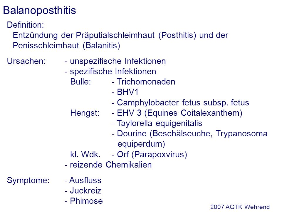 Balanoposthitis Definition: Entzündung der Präputialschleimhaut (Posthitis) und der Penisschleimhaut (Balanitis) Ursachen:- unspezifische Infektionen - spezifische Infektionen Bulle:- Trichomonaden - BHV1 - Camphylobacter fetus subsp.