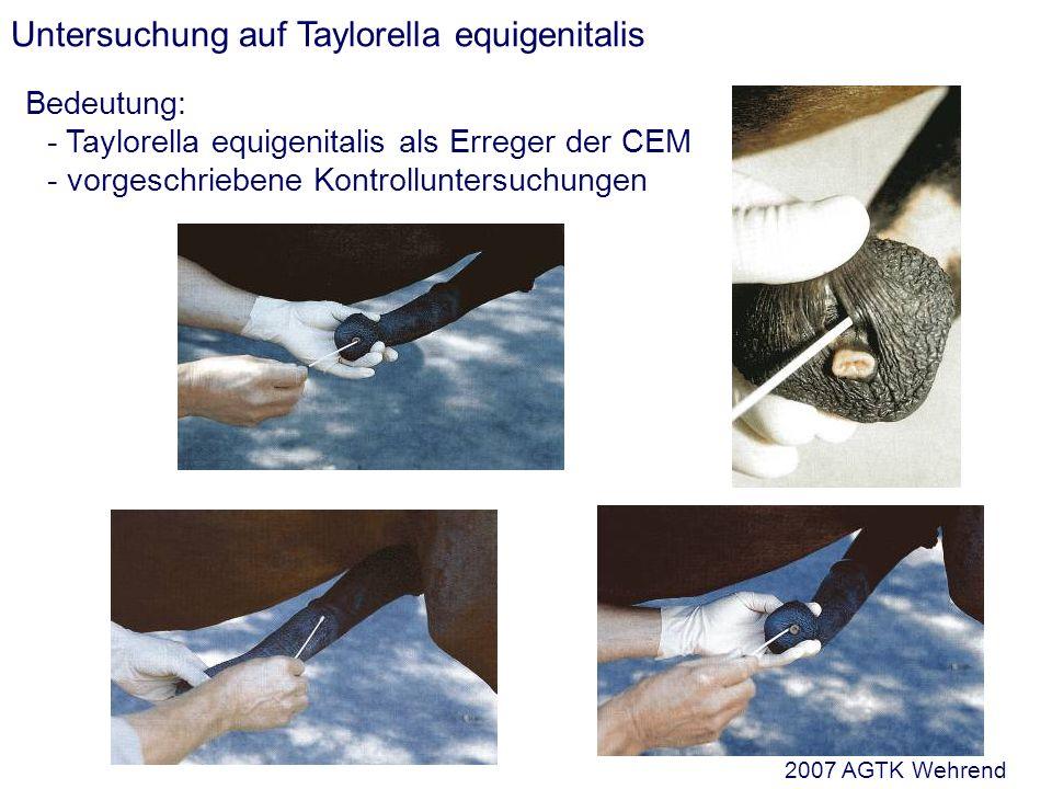 Untersuchung auf Taylorella equigenitalis Bedeutung: - Taylorella equigenitalis als Erreger der CEM - vorgeschriebene Kontrolluntersuchungen 2007 AGTK Wehrend