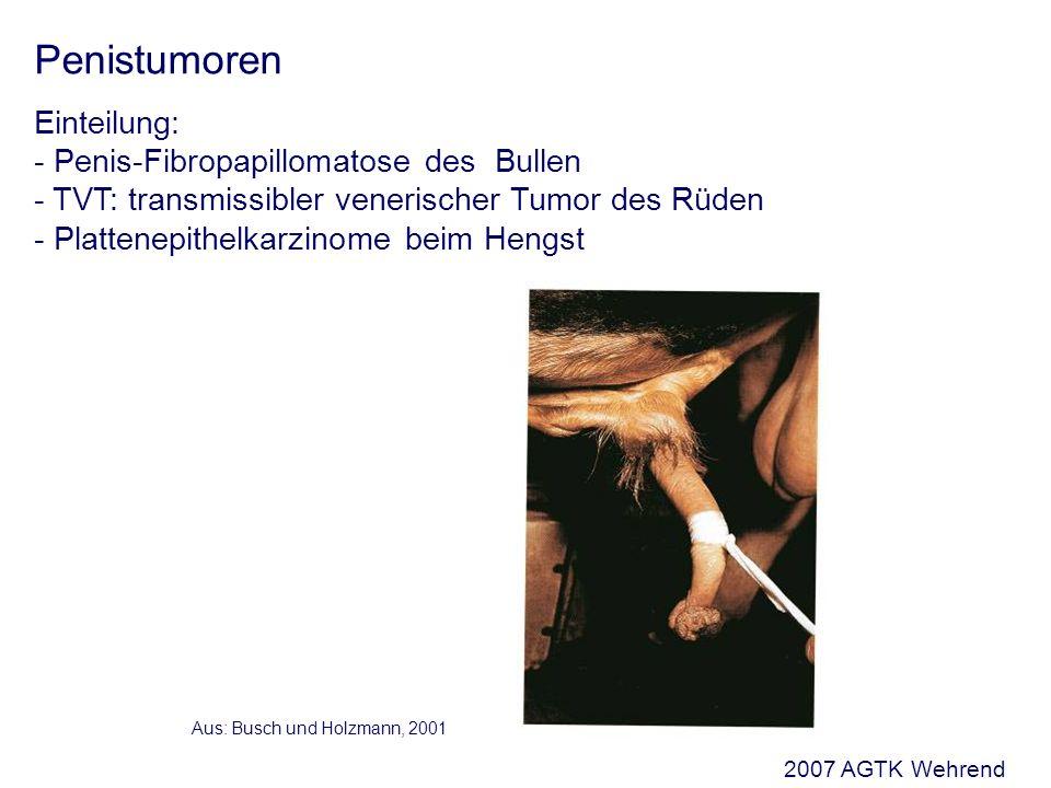 TVT: transmissibler venerischer Tumor des Rüden (Sticker-Tumor) Aus: Kessler, 2000 Ursache: - Übertragung mit dem Deckakt - verursachendes Agens bisher nicht gefunden - Vorkommen bei Hündin und Rüden Verlauf:- Übertragung auf extragenitale Lokalisation möglich - Metastasierung in 5 % der Fälle - Selbstheilung möglich Therapie:- chirurgisch (schlecht) - Chemotherapie (gut) Vincristin-Monotherapie 0,5 - 0,7 mg/m 2 i.
