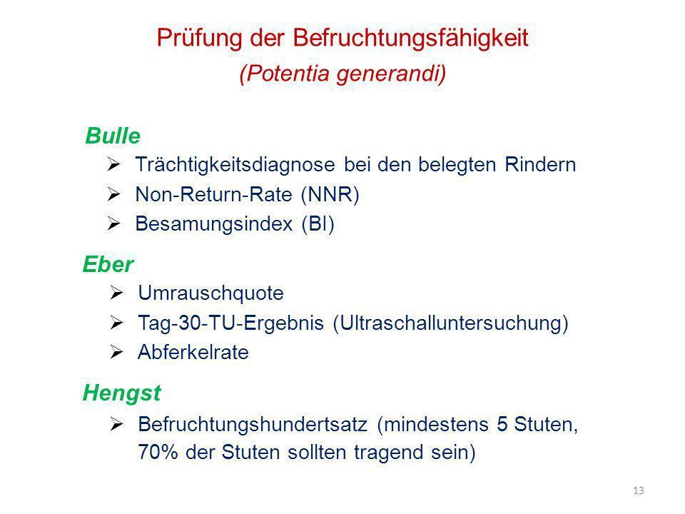 13 Prüfung der Befruchtungsfähigkeit (Potentia generandi) Trächtigkeitsdiagnose bei den belegten Rindern Non-Return-Rate (NNR) Besamungsindex (BI) Bul