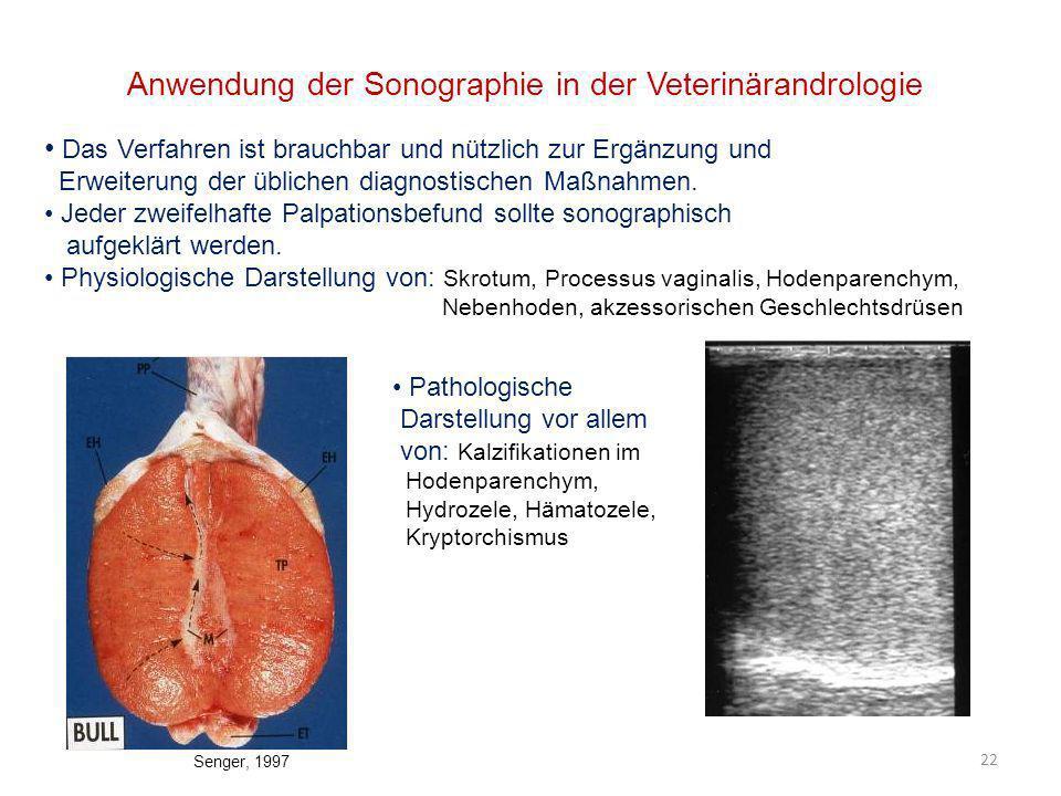 22 Anwendung der Sonographie in der Veterinärandrologie Das Verfahren ist brauchbar und nützlich zur Ergänzung und Erweiterung der üblichen diagnostis