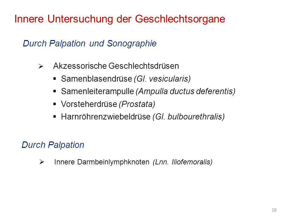 28 Innere Untersuchung der Geschlechtsorgane Durch Palpation und Sonographie Akzessorische Geschlechtsdrüsen Samenblasendrüse (Gl. vesicularis) Samenl