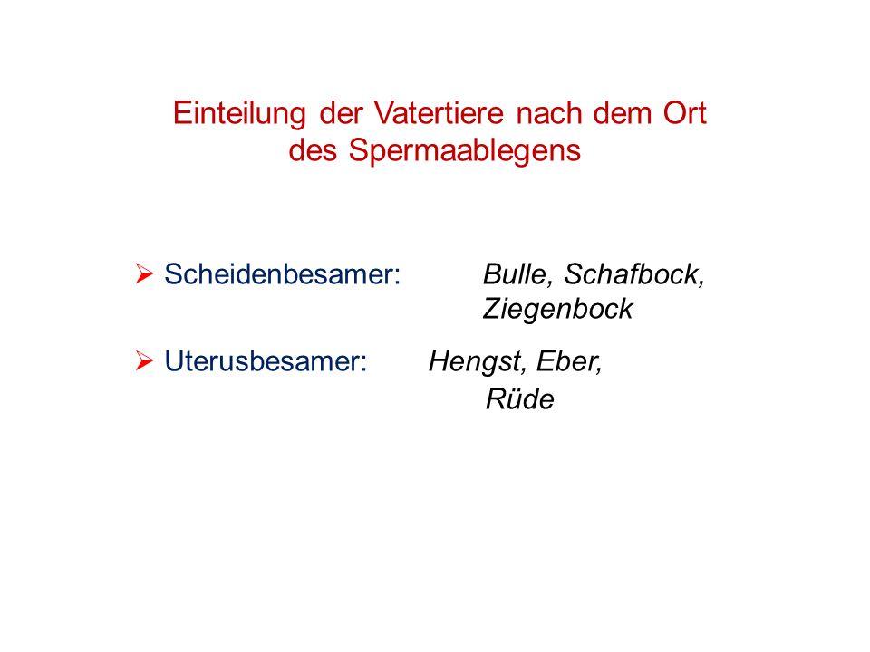 Einteilung der Vatertiere nach dem Ort des Spermaablegens Scheidenbesamer: Bulle, Schafbock, Ziegenbock Uterusbesamer:Hengst, Eber, Rüde