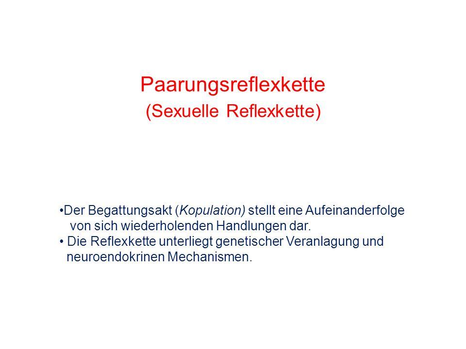 Paarungsreflexkette (Sexuelle Reflexkette) Der Begattungsakt (Kopulation) stellt eine Aufeinanderfolge von sich wiederholenden Handlungen dar. Die Ref