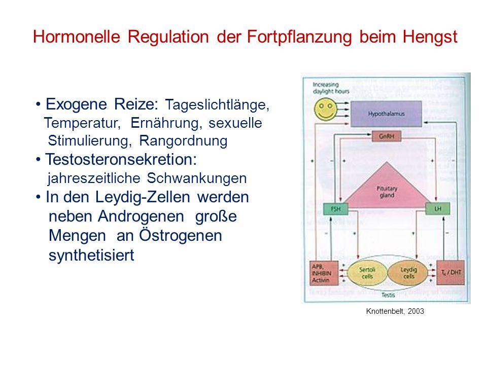 Hormonelle Regulation der Fortpflanzung beim Hengst Exogene Reize: Tageslichtlänge, Temperatur, Ernährung, sexuelle Stimulierung, Rangordnung Testoste