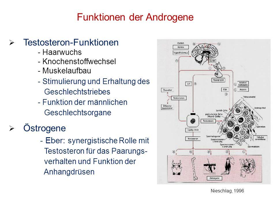 Funktionen der Androgene Testosteron-Funktionen - Haarwuchs - Knochenstoffwechsel - Muskelaufbau - Stimulierung und Erhaltung des Geschlechtstriebes -