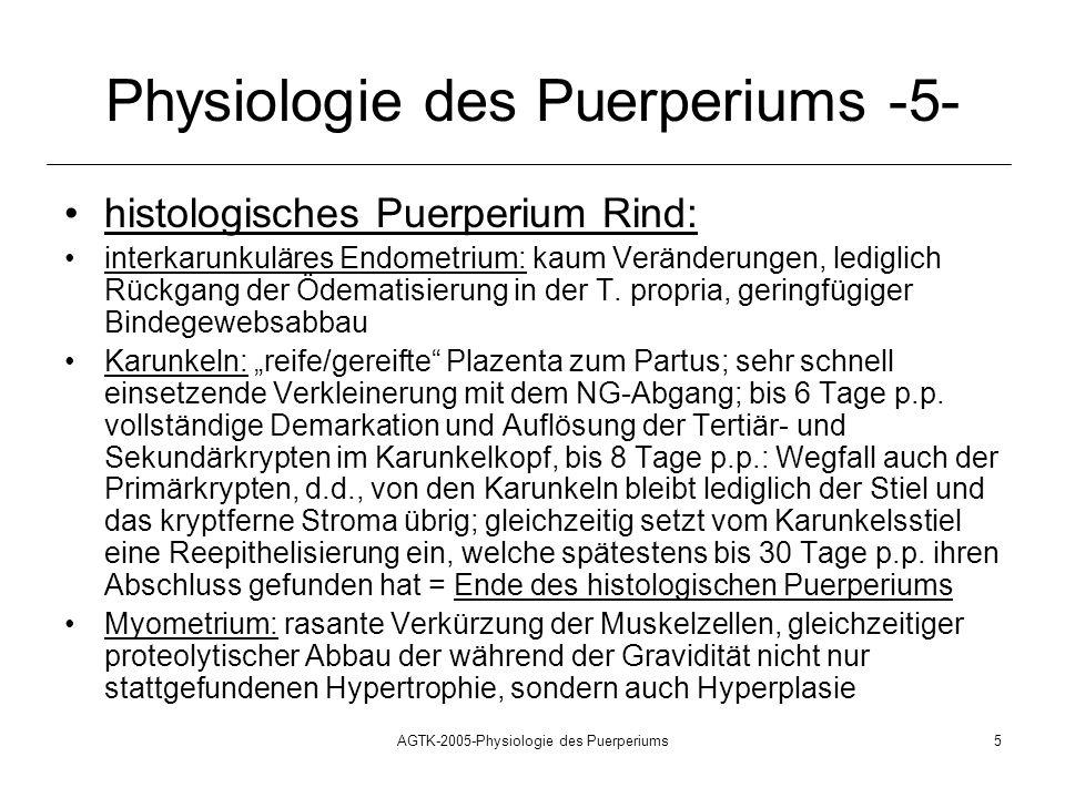 AGTK-2005-Physiologie des Puerperiums5 Physiologie des Puerperiums -5- histologisches Puerperium Rind: interkarunkuläres Endometrium: kaum Veränderung