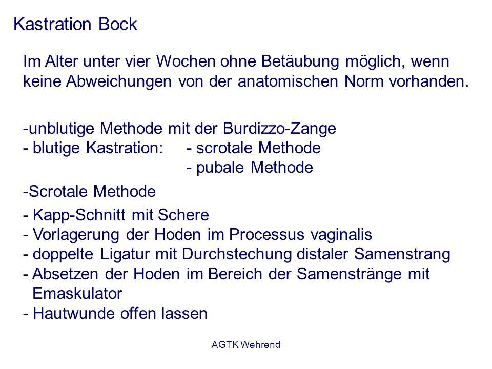 AGTK Wehrend Kastration Bock Im Alter unter vier Wochen ohne Betäubung möglich, wenn keine Abweichungen von der anatomischen Norm vorhanden.