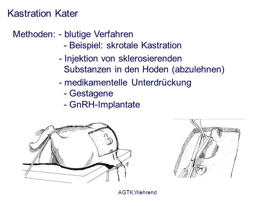 AGTK Wehrend Kastration Kater Methoden: - blutige Verfahren - Beispiel: skrotale Kastration - Injektion von sklerosierenden Substanzen in den Hoden (abzulehnen) - medikamentelle Unterdrückung - Gestagene - GnRH-Implantate