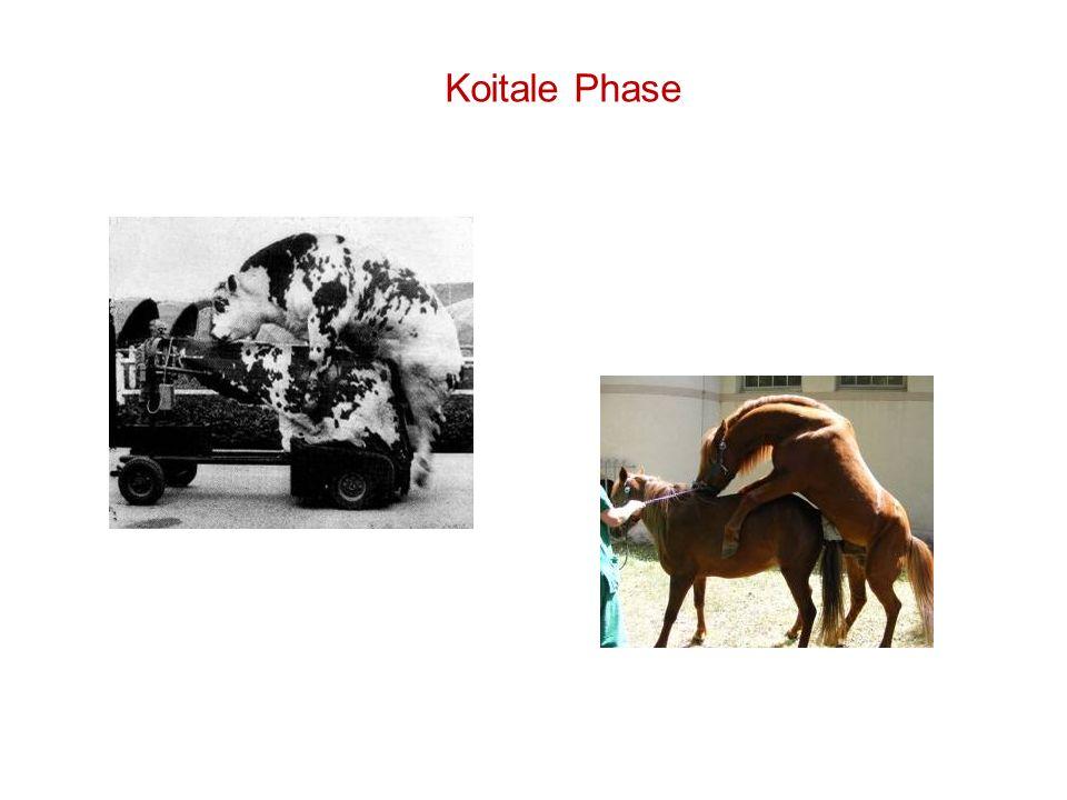 Koitale Phase
