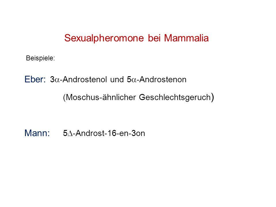 Sexualpheromone bei Mammalia Beispiele: Eber: 3 -Androstenol und 5 -Androstenon (Moschus-ähnlicher Geschlechtsgeruch ) Mann: 5 -Androst-16-en-3on