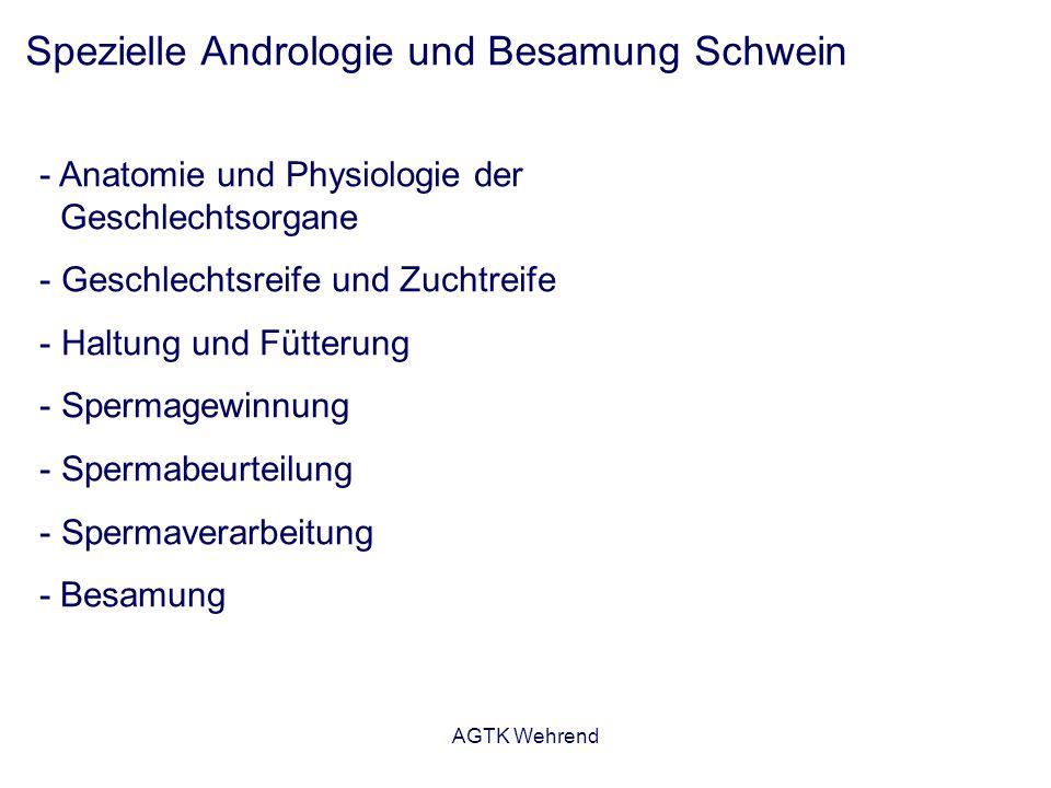 AGTK Wehrend Spezielle Andrologie und Besamung Schwein - Anatomie und Physiologie der Geschlechtsorgane - Geschlechtsreife und Zuchtreife - Haltung und Fütterung - Spermagewinnung - Spermabeurteilung - Spermaverarbeitung - Besamung