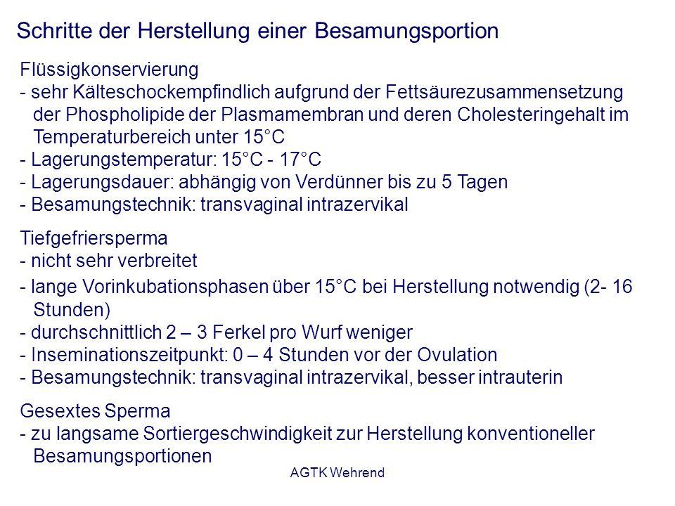 AGTK Wehrend Schritte der Herstellung einer Besamungsportion Flüssigkonservierung - sehr Kälteschockempfindlich aufgrund der Fettsäurezusammensetzung der Phospholipide der Plasmamembran und deren Cholesteringehalt im Temperaturbereich unter 15°C - Lagerungstemperatur: 15°C - 17°C - Lagerungsdauer: abhängig von Verdünner bis zu 5 Tagen - Besamungstechnik: transvaginal intrazervikal Tiefgefriersperma - nicht sehr verbreitet - lange Vorinkubationsphasen über 15°C bei Herstellung notwendig (2- 16 Stunden) - durchschnittlich 2 – 3 Ferkel pro Wurf weniger - Inseminationszeitpunkt: 0 – 4 Stunden vor der Ovulation - Besamungstechnik: transvaginal intrazervikal, besser intrauterin Gesextes Sperma - zu langsame Sortiergeschwindigkeit zur Herstellung konventioneller Besamungsportionen