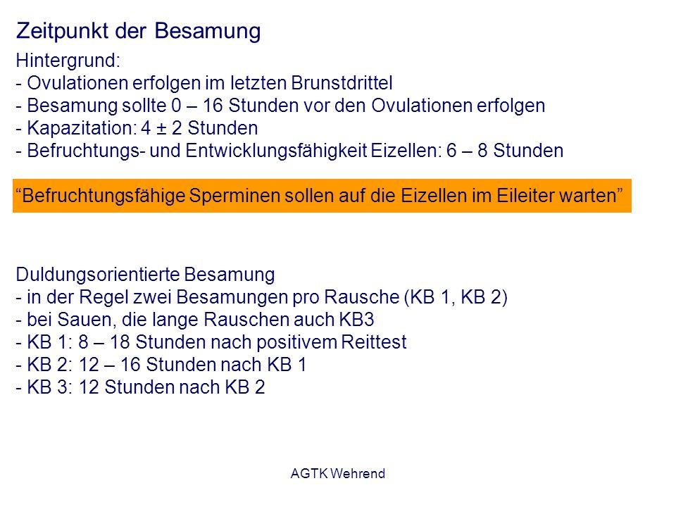 AGTK Wehrend Zeitpunkt der Besamung Hintergrund: - Ovulationen erfolgen im letzten Brunstdrittel - Besamung sollte 0 – 16 Stunden vor den Ovulationen erfolgen - Kapazitation: 4 ± 2 Stunden - Befruchtungs- und Entwicklungsfähigkeit Eizellen: 6 – 8 Stunden Befruchtungsfähige Sperminen sollen auf die Eizellen im Eileiter warten Duldungsorientierte Besamung - in der Regel zwei Besamungen pro Rausche (KB 1, KB 2) - bei Sauen, die lange Rauschen auch KB3 - KB 1: 8 – 18 Stunden nach positivem Reittest - KB 2: 12 – 16 Stunden nach KB 1 - KB 3: 12 Stunden nach KB 2