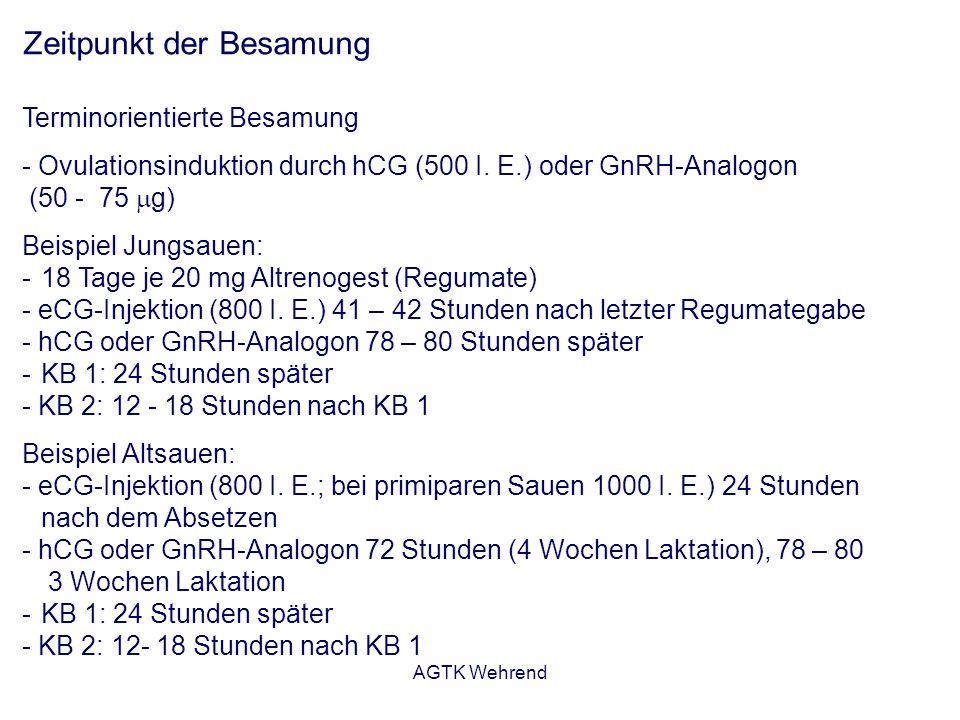 AGTK Wehrend Zeitpunkt der Besamung Terminorientierte Besamung - Ovulationsinduktion durch hCG (500 I.
