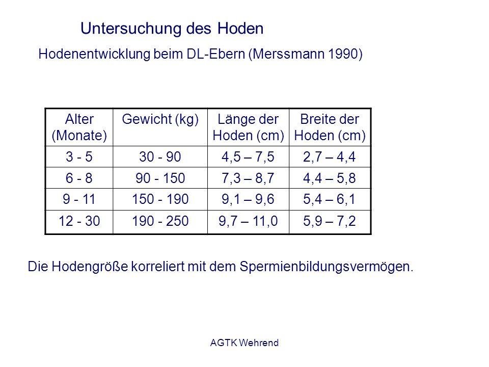 AGTK Wehrend Untersuchung des Hoden Die Hodengröße korreliert mit dem Spermienbildungsvermögen.