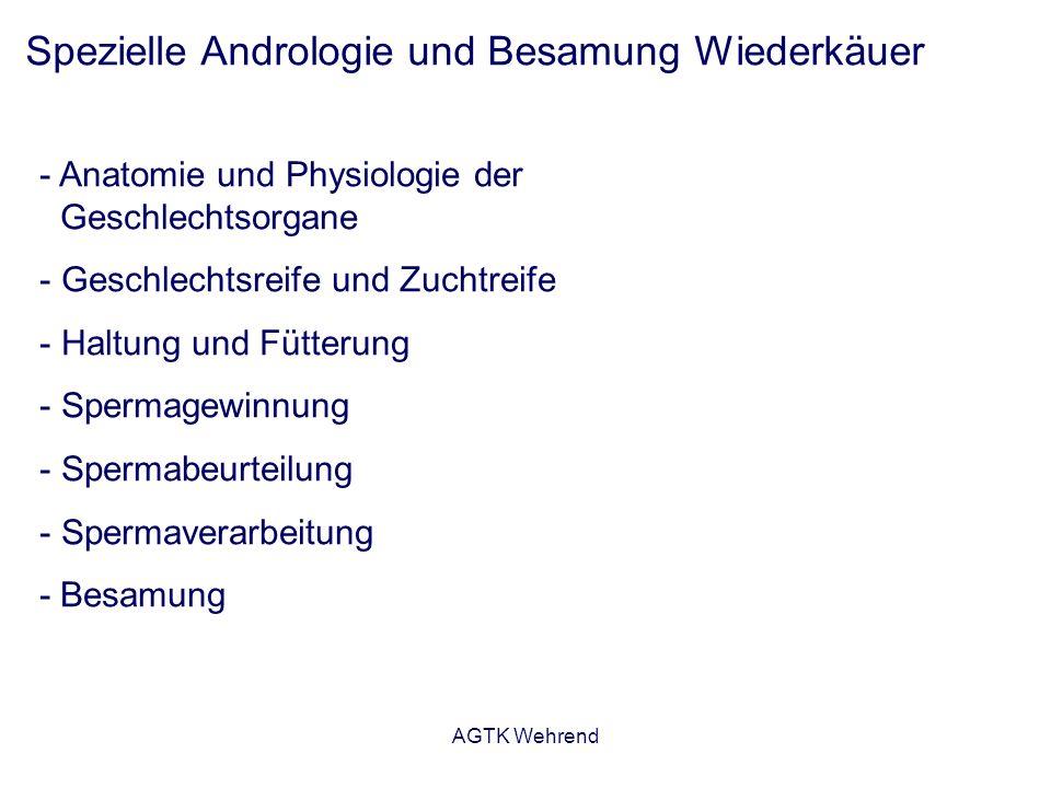 AGTK Wehrend Aus: von Engelhardt und Breves, 2005 Hoden und Nebenhoden Wiederkäuer Länge des Nebenhodens: Bulle: 40 – 50 Meter kl.