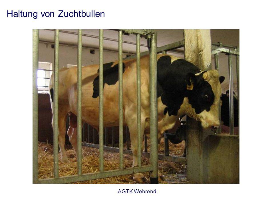 AGTK Wehrend Haltung von Zuchtbullen