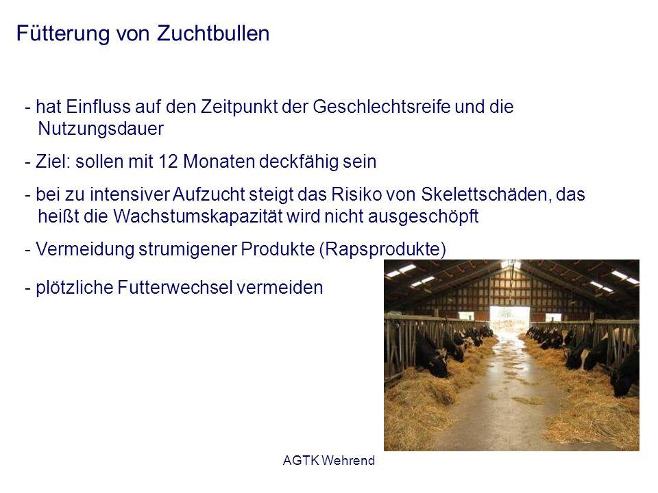 AGTK Wehrend Fütterung von Zuchtbullen - hat Einfluss auf den Zeitpunkt der Geschlechtsreife und die Nutzungsdauer - Ziel: sollen mit 12 Monaten deckf