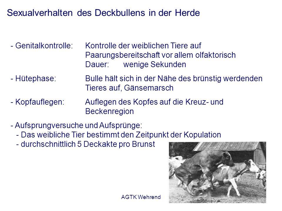 AGTK Wehrend Sexualverhalten des Deckbullens in der Herde - Genitalkontrolle: Kontrolle der weiblichen Tiere auf Paarungsbereitschaft vor allem olfakt