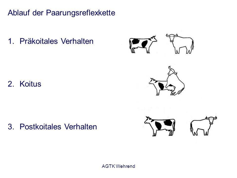 AGTK Wehrend Ablauf der Paarungsreflexkette 1.Präkoitales Verhalten 2.Koitus 3.Postkoitales Verhalten