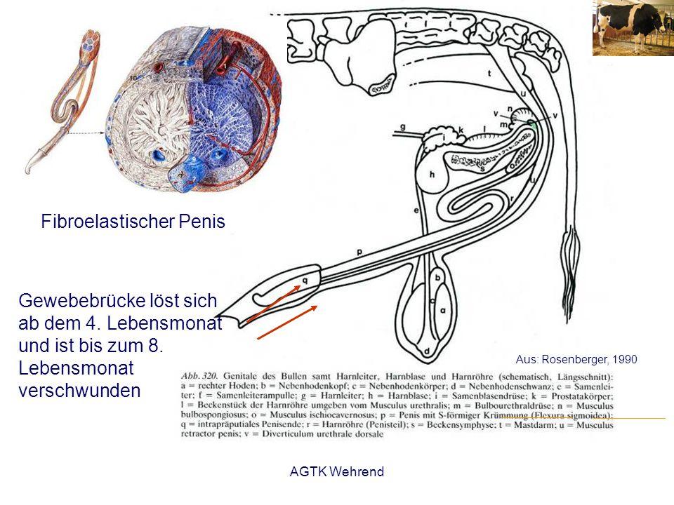 AGTK Wehrend Besamung - Schaf: 1907; Ziege: in Deutschland 1942 - Methoden: (vaginal), intrazervikal, intrauterin - unter Sichtkontrolle: mit Vaginoskop, Endoskop oder Laparotomie - Probleme kann die Passage der Zervix bereiten