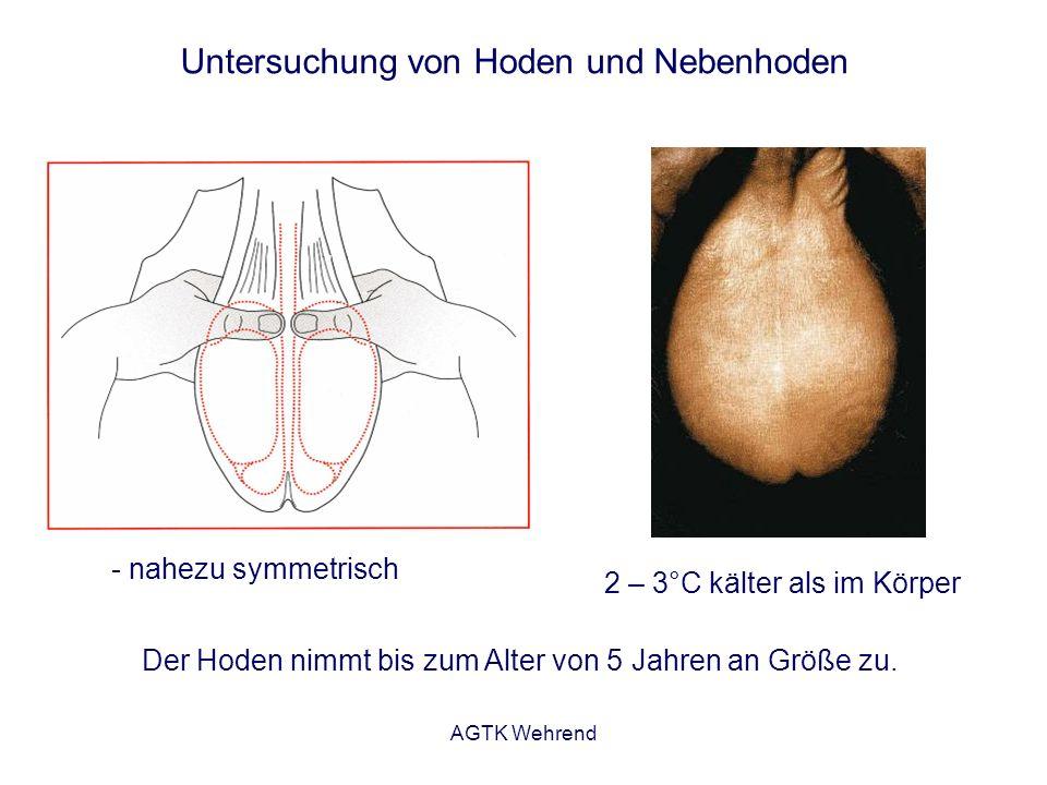 AGTK Wehrend Untersuchung von Hoden und Nebenhoden 2 – 3°C kälter als im Körper Der Hoden nimmt bis zum Alter von 5 Jahren an Größe zu. - nahezu symme