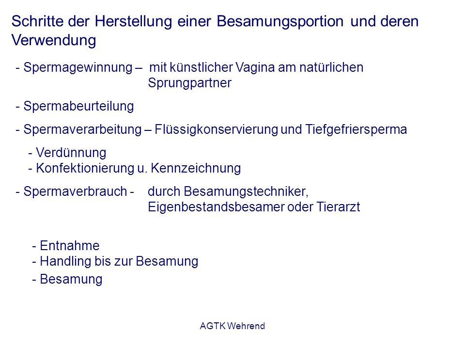 AGTK Wehrend Schritte der Herstellung einer Besamungsportion und deren Verwendung - Spermagewinnung – mit künstlicher Vagina am natürlichen Sprungpart